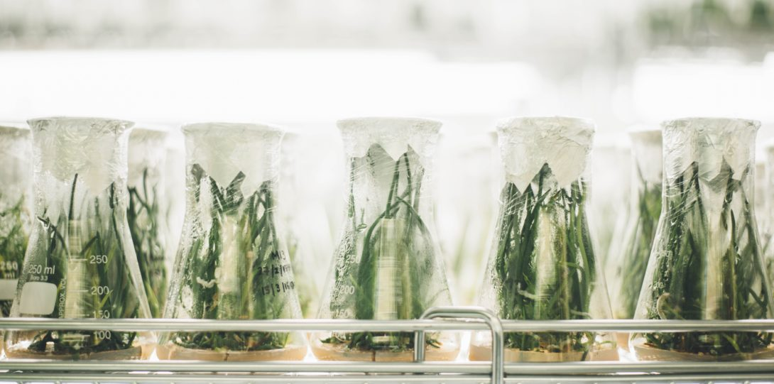 Green plants in beakers in a lab
