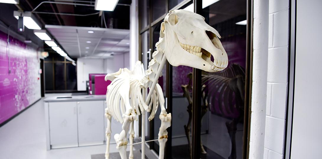 Dinosaur bones hallway display