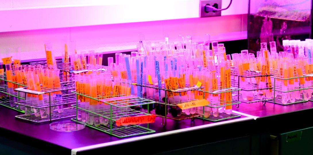 Test tubes under the UV light