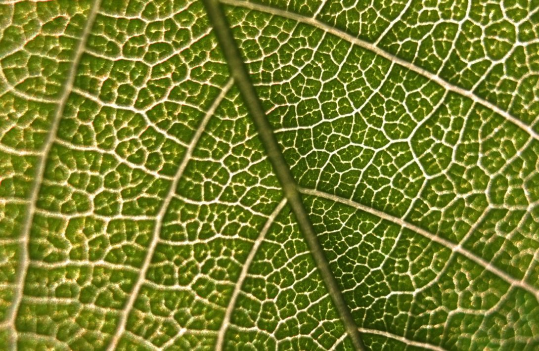 close up look at a leaf