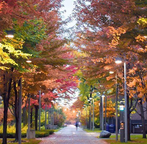 Campus walkway in fall