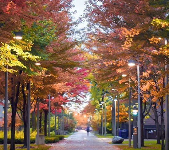 Campus walkway in fall with UIC banners